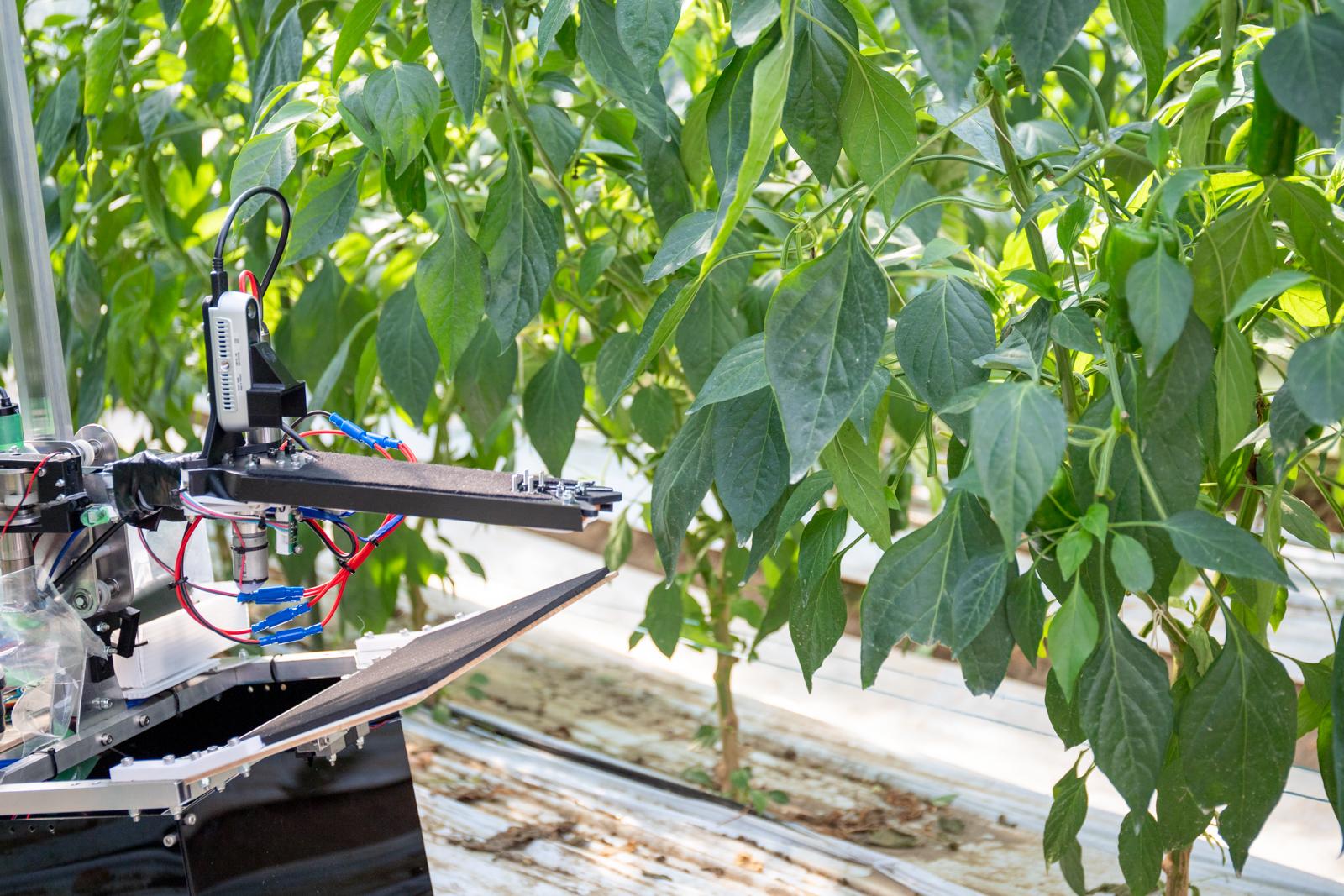 ビニールハウス内を吊り下げで移動する自動収穫ロボット