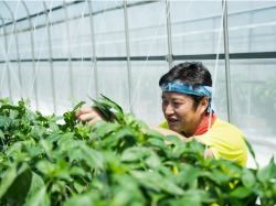 農業用収穫ロボットを開発するAGRIST、VC及び地域金融機関等計6社から、持続可能な農業の実現を目的とした資金調達を実施